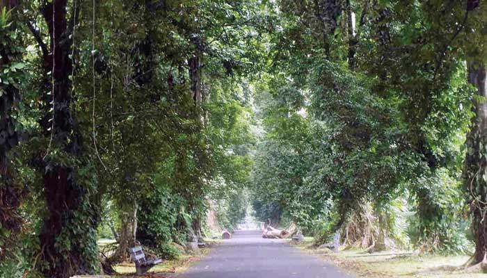 Pohon Samidha